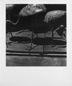 Issei Suda, 'Birds', 1970 ca.