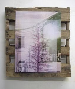 Ian Pedigo, 'Sunset Mantle Tree', 2014