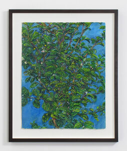 Beth Secor, 'Young Hawthorne Late Spring', 2011-2013
