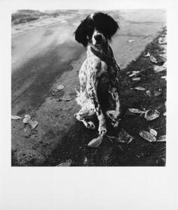 Issei Suda, 'Dog', 1970 ca.