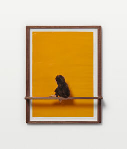 Philip Emde, 'Untitled (Jocko enjoying Yellow)', 2019