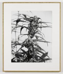 Joachim Koester, 'From the Secret Garden of Sleep 05', 2008