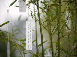 Yoko Ono, 'Wish Tree Garden'