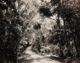 Thomas Struth, Paradise 8 (Blumfield Track), Daintree, Australia