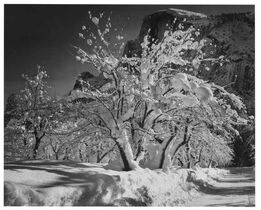 Ansel Adams, Half Dome, Apple Orchard Winter Yosemite National Park CA