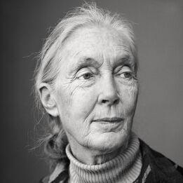 Martin Schoeller, Jane Goodall