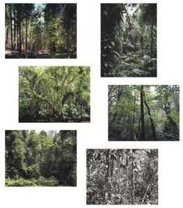 Thomas Struth, Paradise - portfolio of six works