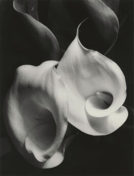 Imogen Cunningham, Two Callas