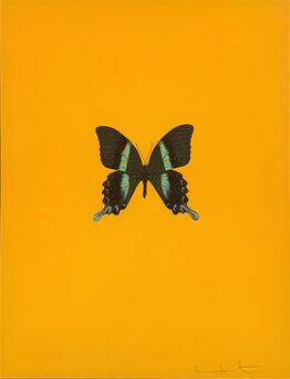 Damien Hirst, Six Butterflies III