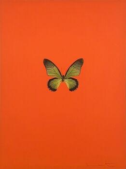 Damien Hirst, Six Butterflies I