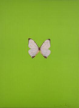 Damien Hirst, Six Butterflies II