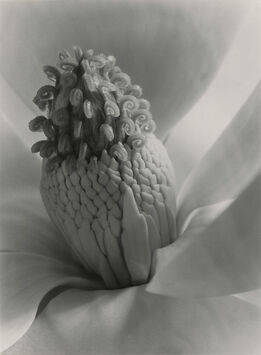 Imogen Cunningham, Magnolia Blossom, Tower of Jewels