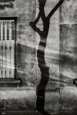 Michael Wolf, #4, Paris Tree Shadows