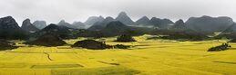 Edward Burtynsky, Canola Fields #2, Luoping, Yunnan Province, China