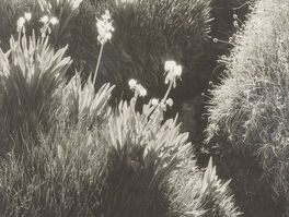 Ansel Adams, 'Sierra Meadow', ca. 1930