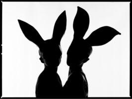 Tyler Shields, 'Bunnies Silhouette', 2020