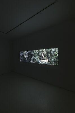 When Animals Talked to Humans, installation view