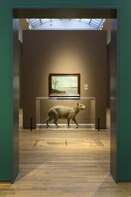 Frans Post. Animals in Brazil, installation view