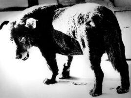 "Daido Moriyama, 'Dog Town from ""Searching Journeys 3"" Misawa', 1971-printed later"