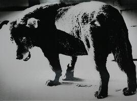 "Daido Moriyama, 'Dog Town from ""Searching journeys 3"", Misawa, Aomori', 1971"