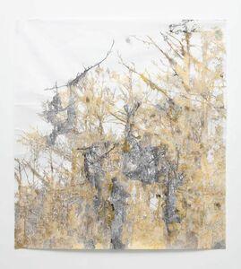 Anne Allen, 'Golden Cypress', 2013