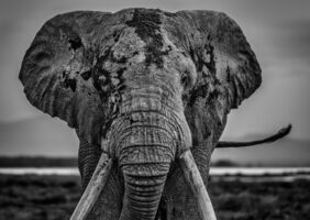 David Yarrow, 'Mud', 2020