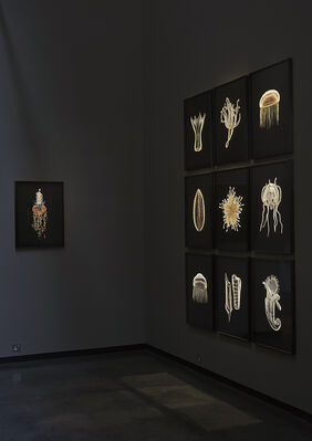 Guido Mocafico: Blaschka, installation view