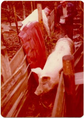 Michael E. Smith: pig, installation view