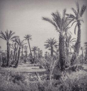 Silke Lauffs, 'Young palm trees, Marrakech, Morocco', 2018