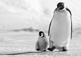 David Yarrow, 'Father and son', ca. 2010