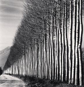 Michael Kenna, 'Poplar Trees, Fucino, Abruzzo, Italy', 2016
