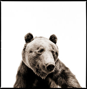 Nine Francois, 'Grizzly 2', 2014