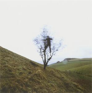 Andy Goldsworthy, 'Hawthorn Tree Shake, Penpont, Dumfriesshire, February 2008', 2008