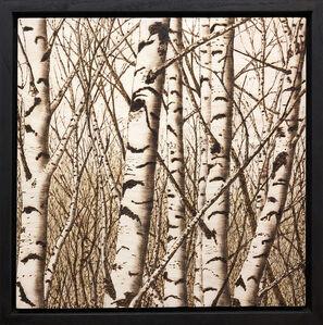 Paul Chojnowski, 'Birches in the Glen', 2019