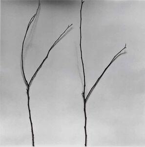 Chu Chu  儲楚, 'Whispers of Trees-Ceris', 2011-2017