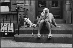Elliott Erwitt, 'New York City. 2000. (Bulldogs on stoop)', 2000