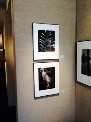 Edward Weston & Sons, installation view