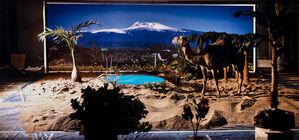 Jeju Island Camel