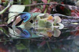 Submerged Garden 7226
