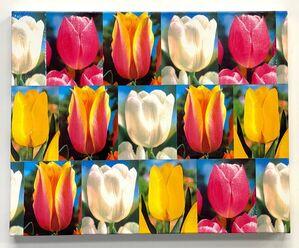 Tulip Rendition