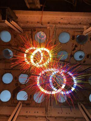 25: Nocturnal Flora, installation view