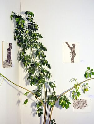 Into the Deep Woods, installation view