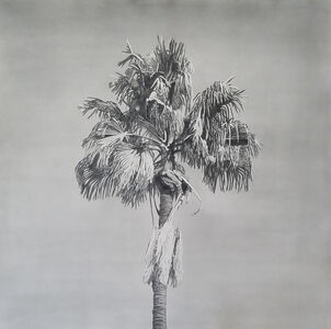 Clay Wagstaff, 'Palms no. 12', 2016