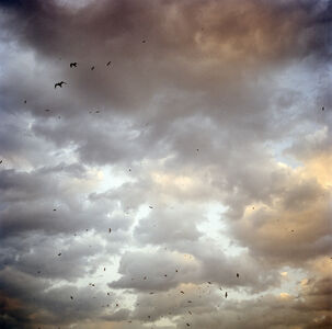 Olivia Arthur, 'Birds over the Bosphorous (Istanbul, Turkey)', 2006