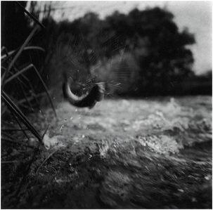 Charles Lindsay, 'Brown Trout, California', 1996