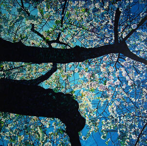 Christopher O'Connor, 'In Bloom No. 4'