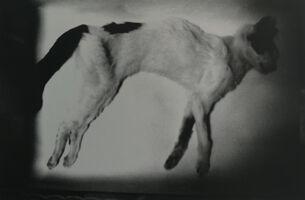 Nobuyoshi Araki, 'Sentimental journey,SpringJourney', 2010