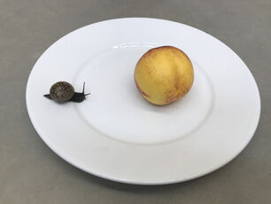 Leg, snails and peaches