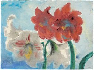 White and Red Amaryllis