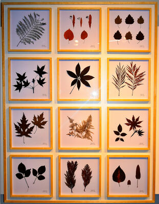 GIFTS OF NATURE, installation view